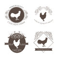 Set chicken and rooster farm logo emblem with calligraphic decorative elements. Natural and fresh farm. Royalty Free Stock Photo
