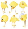 Set of chicks Stock Image
