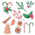 Set of Christmas elements, red berries, lollipops, holly, cinnamon, mistletoe, ginger cookie, hand drawn illustration, watercolor.