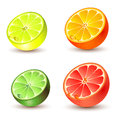 Set of citrus fruit Royalty Free Stock Photos