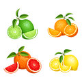 Set of citrus fruits isolated on white. Vector illustration. Royalty Free Stock Photo