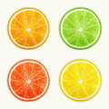 Set of citrus fruits orange lime grapefruit lemon eps vector illustration Royalty Free Stock Images