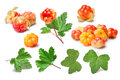 Set of cloudberries (Rubus Chamaemorus) and leaves, paths,elemen Royalty Free Stock Photo