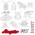 Set with cockroaches and pests hand drawn bloodsucking insects mosquito mite bug isolated doodle line art illustration graphic Stock Images