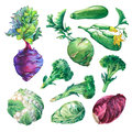Set, collection of fresh vegetables- cabbage, zucchini, kohlrabi, broccoli and cauliflower.