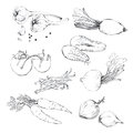 Set, collection of various hand drawn vegetables.