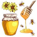 Set of colored sketches. Collection of VECTOR illustrations. HONEY