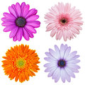 Set of colorful flower isolated on white