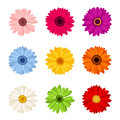 Set of colorful gerbera flowers. Vector illustration.