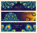 Set colorful horizontal banners with peacock feather. Royalty Free Stock Photo