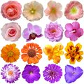 Set of colorful seasonal blooms over white Stock Images