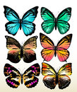 Set of colorful vector butterflies Stock Photo