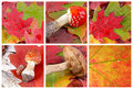 Set of colourful autumn leaves Royalty Free Stock Photos
