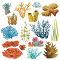Set of corals and algaes. Royalty Free Stock Photo