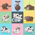 Set of Cow family Royalty Free Stock Photo
