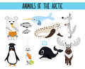 Set of Cute cartoon Animals and birds of the Arctic on a white background. Polar bear, Arctic wolf, hare, walrus, penguin, narwhal