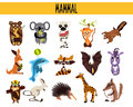Set of cute cartoon animals mammals living in different parts of the world forests seas and tropical jungles koala lemur monke Royalty Free Stock Images