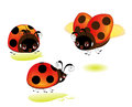 A set of cute cartoon ladybugs in various perspectives Stock Photos
