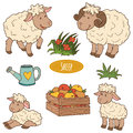 Set of cute farm animals and objects, vector family sheep
