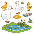 Set of cute farm animals and objects, vector goose family Royalty Free Stock Photo