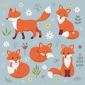 Set of cute foxes.