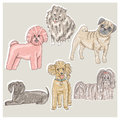 Set of cute little breed dogs bichon pug spitz dachshund poodle shih tzu Royalty Free Stock Images