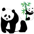Set of cute panda bears with bamboo Royalty Free Stock Photos