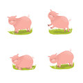 Set of cute pigs four Royalty Free Stock Images