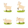 Set of cute vector goats Stock Photos