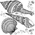 Set of decorative seashells  on white background Royalty Free Stock Photo