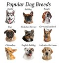 Set of different adorable dogs on background. Most popular breeds Royalty Free Stock Photo