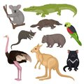 Set of Australian animals and birds. Wild creatures. Fauna theme. Detailed vector elements for zoology book or poster Royalty Free Stock Photo