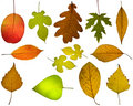Set of different autumnal leaves Royalty Free Stock Image