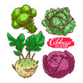 Set of different cabbages