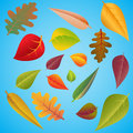 Set of different colourful autumn leaves on blue background Stock Photos