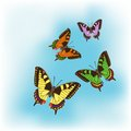 Set of different colourful butterflies Stock Photo