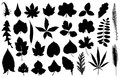 Set of different leaves isolated on white Stock Photo