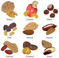 Set of different nuts Stock Photography