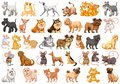 Set of different pets