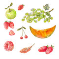 Set of different russian fruits drawn with watercolor paint. Ill