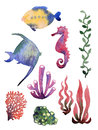 Set of different sea shells corals and starfish watercolor illustration global color used Royalty Free Stock Photography
