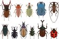 Set of different types of bugs and beetles isolated on white background in flat style. Vector illustration. Royalty Free Stock Photo