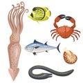 Set of different types of sea animals illustration tropical character wildlife marine aquatic fish