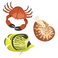 Set of different types of sea animals illustration tropical character wildlife marine aquatic fish