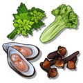Set of dill, salad, oysters and carnation. Collection of good and healthy products. Vector food.