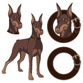 Set of Doberman colored illustrations in a collar.