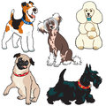 Set of dogs collection with small breeds pictures isolated on white background Royalty Free Stock Photos