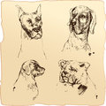 Set of dogs heads dalmatian bloodhound bulldog hand drawn il illustration sketch in vintage style Royalty Free Stock Photography
