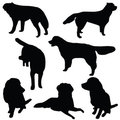 Set of dogs silhouette Stock Image