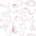 Set of drawing fruits and vegetables vintage vector illustration Stock Photos